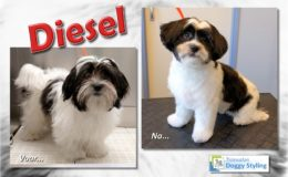 Trimsalon Doggy Styling - Diesel