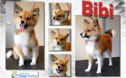 Trimsalon Doggy Styling - Bibi