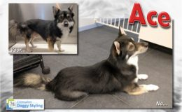 Trimsalon Doggy Styling - Ace