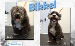 Trimsalon Doggy Styling - Bikkel