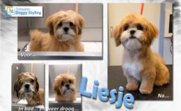 Trimsalon Doggy Styling - Liesje