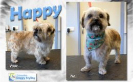 Trimsalon Doggy Styling - Happy