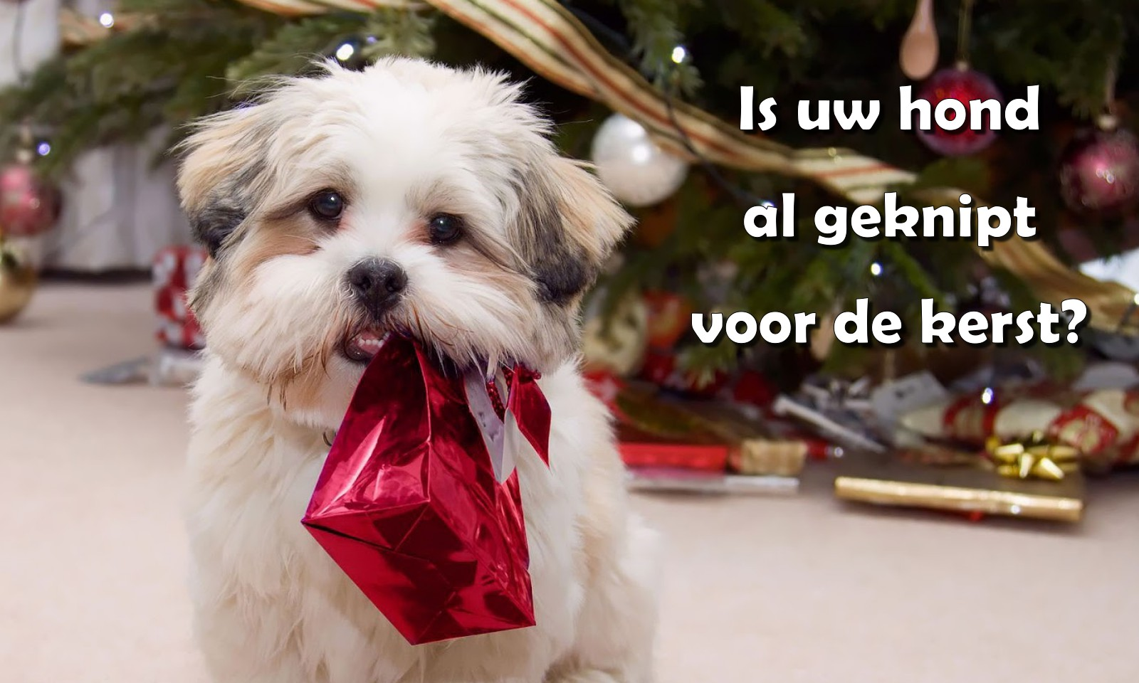 Trimsalon Doggy Styling - Kerst