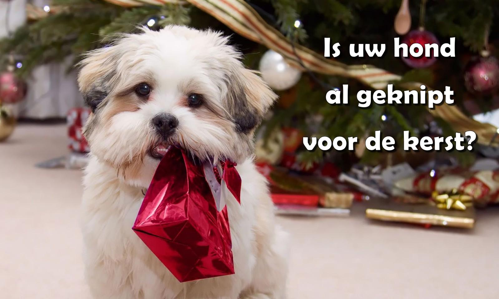 Trimsalon Doggy Styling - Kerst