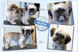 2015-03-09-Wollie resized