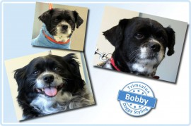 2015-03-19-Bobby resized