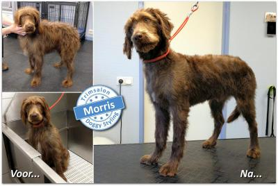 Trimsalon Doggy Styling - Morris