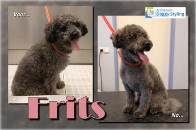 Trimsalon Doggy Styling - Frits