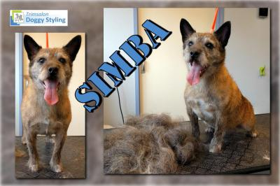 Trimsalon Doggy Styling - Simba