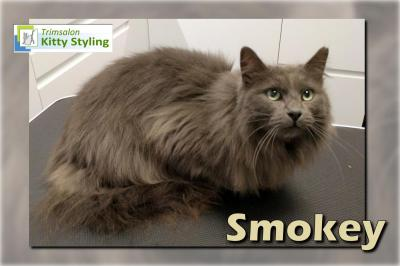 Trimsalon Kitty Styling - Smokey