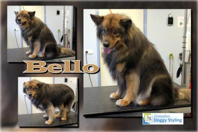 Trimsalon Doggy Styling - Bello