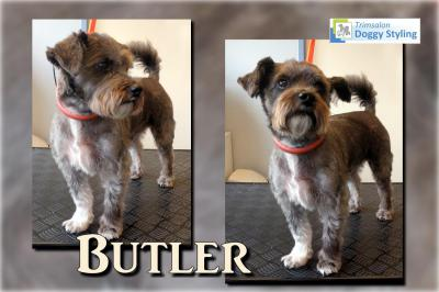 Trimsalon Doggy Styling - Butler