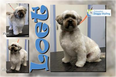 Trimsalon Doggy Styling - Loet