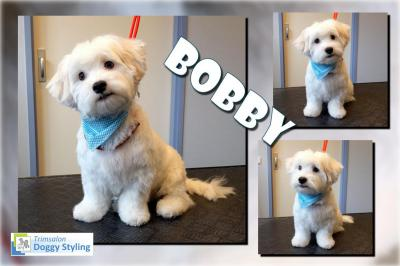 Trimsalon Doggy Styling - Bobby