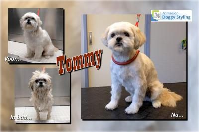 Trimsalon Doggy Styling - Tommy