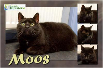 Trimsalon Kitty Styling - Moos