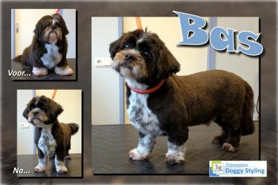 Trimsalon Doggy Styling - Bas
