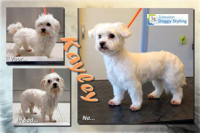 Trimsalon Doggy Styling - Kayley