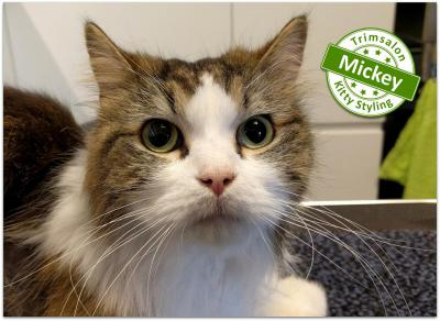 Trimsalon Kitty Styling - Mickey