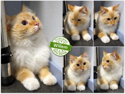 Trimsalon Kitty Styling - Willem