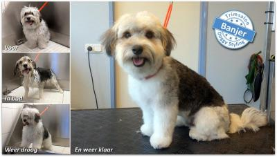 Trimsalon Doggy Styling - Banjer