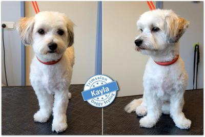 Trimsalon Doggy Styling - Kayla