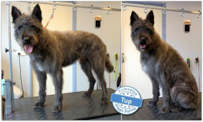 Trimsalon Doggy Styling - Tup