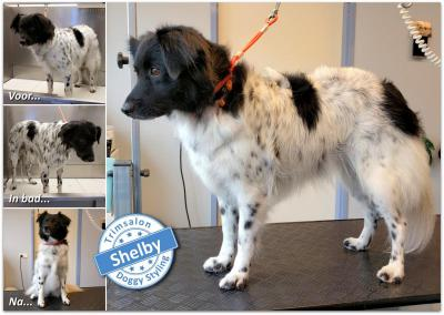 Trimsalon Doggy Styling - Shelby