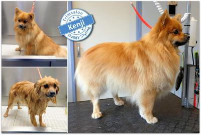 Trimsalon Doggy Styling - Kenji