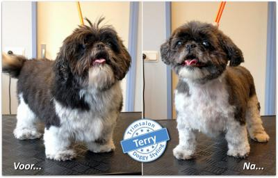 Trimsalon Doggy Styling - Terry