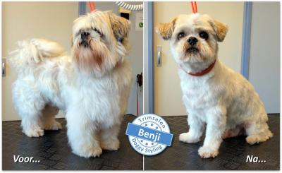 Trimsalon Doggy Styling - Benji
