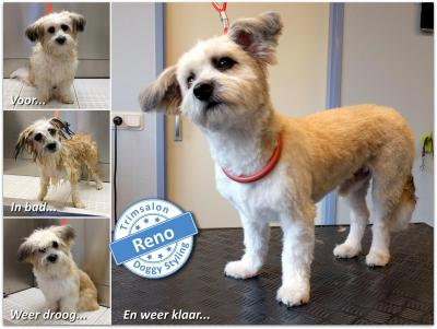 Trimsalon Doggy Styling - Reno