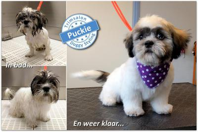 Trimsalon Doggy Styling - Puckie