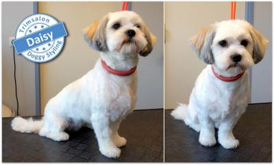 Trimsalon Doggy Styling - Daisy