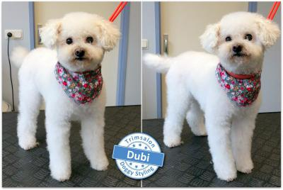 Trimsalon Doggy Styling - Dubi