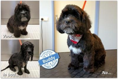 Trimsalon Doggy Styling - Buddy
