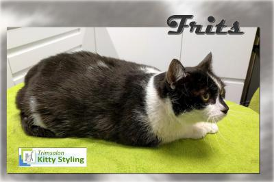 Trimsalon Kitty Styling - Frits