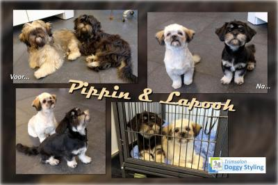 Trimsalon Doggy Styling - Pippin en Lapooh