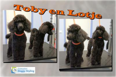 Trimsalon Doggy Styling - Toby en Lotje