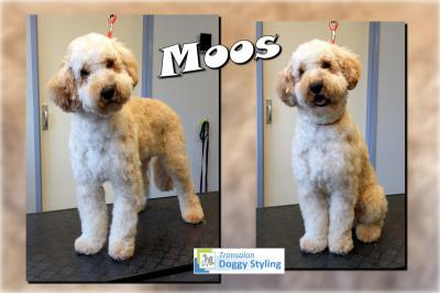 Trimsalon Doggy Styling - Moos