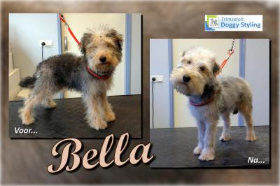 Trimsalon Doggy Styling - Bella