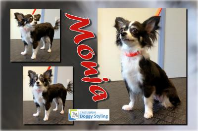 Trimsalon Doggy Styling - Monja