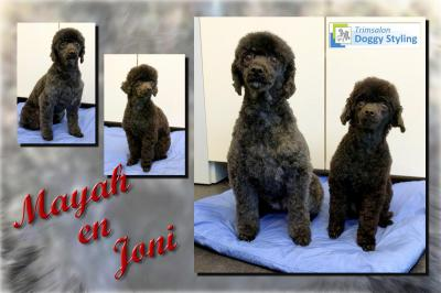 Trimsalon Doggy Styling - Mayah en Joni