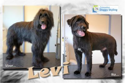 Trimsalon Doggy Styling - Levi