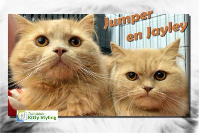 Trimsalon Kitty Styling - Jumper en Jayley