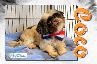 Trimsalon Doggy Styling - Coco