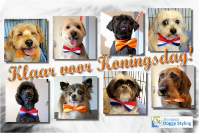 Trimsalon Doggy Styling - Koningsdag