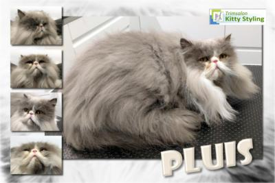 Trimsalon Kitty Styling - Pluis