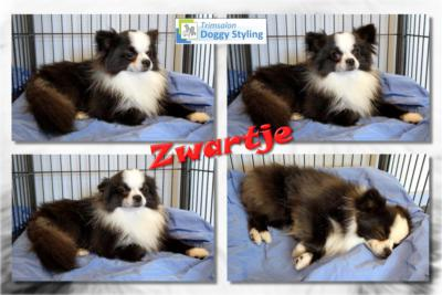 Trimsalon Doggy Styling - Zwartje