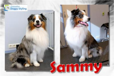 Trimsalon Doggy Styling - Sammy